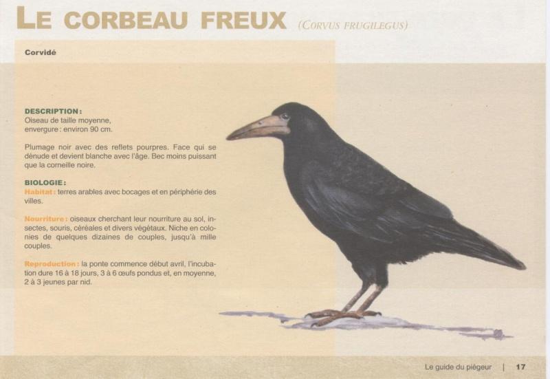 corbeau et fleau  327825lecor10