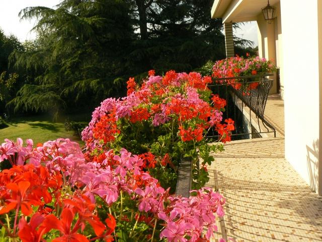 Aimez vous les fleurs  333586P1140785