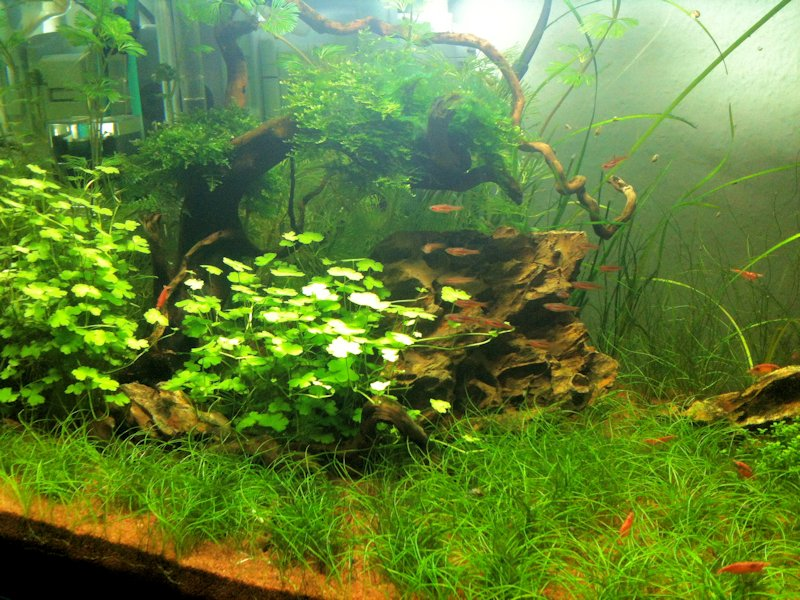 Mon Scaper's Tank 50L Aquascaping 333978IMG0390