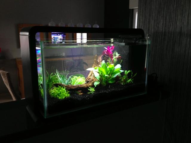 Mon SuperFish Home 25 334852IMG0044