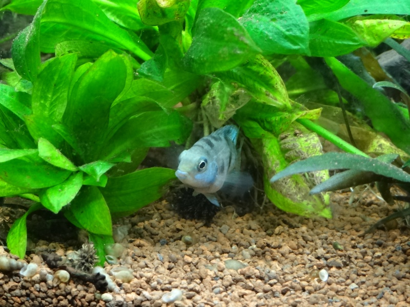 Ma Fish'étagère et les autres  - Page 3 335167DSC06969