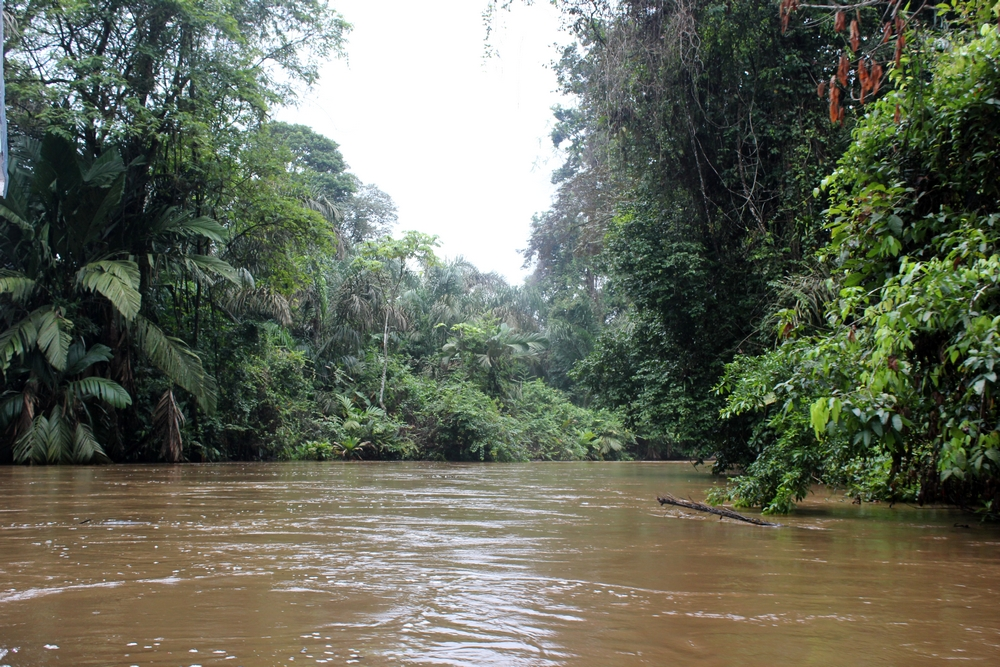 15 jours dans la jungle du Costa Rica 336936tortu1r