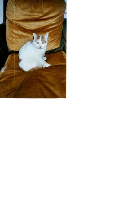 Que préférez vous chien ou chat? - Page 3 340209img001
