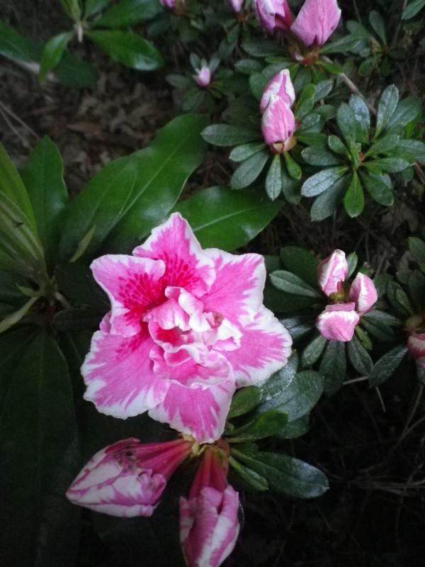 Quelques floraisons - Page 2 342418IMGP3096