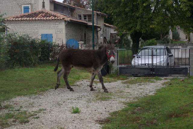 (Dept19) ROMEO, Ane entier 6 ans, réservé par Leignel17 !!!!!! (Oct 2014) - Page 2 345130IMGP5462