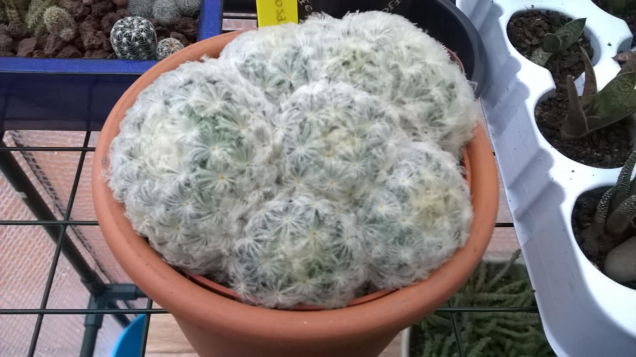 Les cactus de Digitaline 348954WP20160106165605Pro