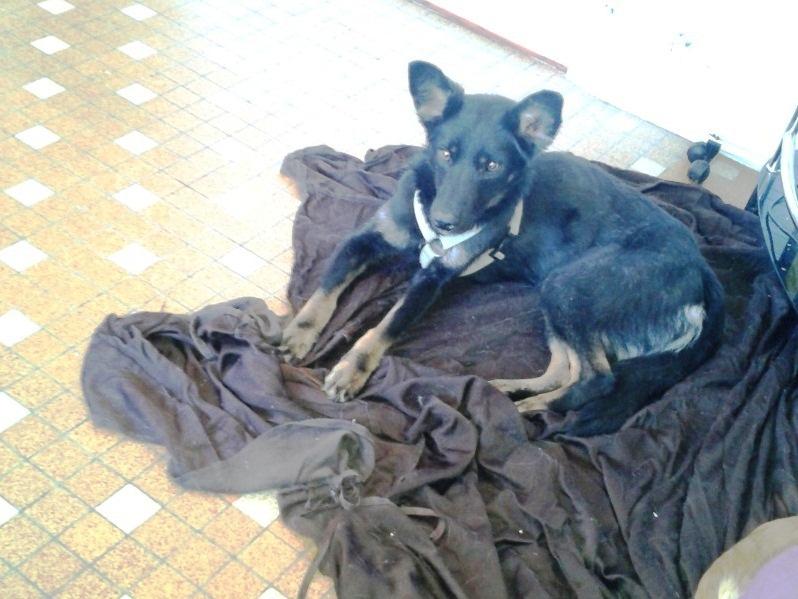 > Mika, un amour de petite chienne, née en mai 2011 - Adoptée 3533162012014