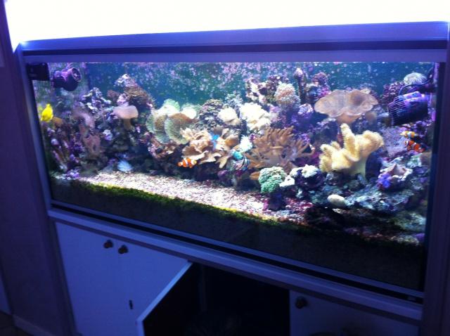 Projet Aqua 450 litres avec ARDUINO - Page 5 357433IMG4150