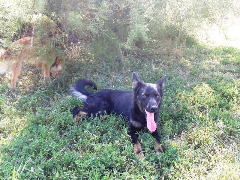 > Mika, un amour de petite chienne, née en mai 2011 - Adoptée 35771428juillet20123