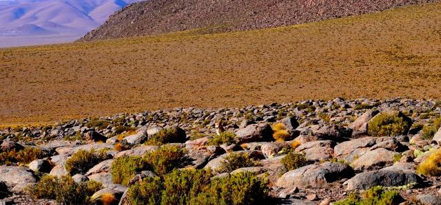Missions scientifiques au Sud Lipez et au Salar d'Uyuni en Bolivie 357986DSC00377lger