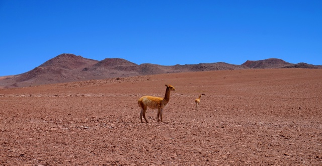 Missions scientifiques au Sud Lipez et au Salar d'Uyuni en Bolivie 359533DSC00319