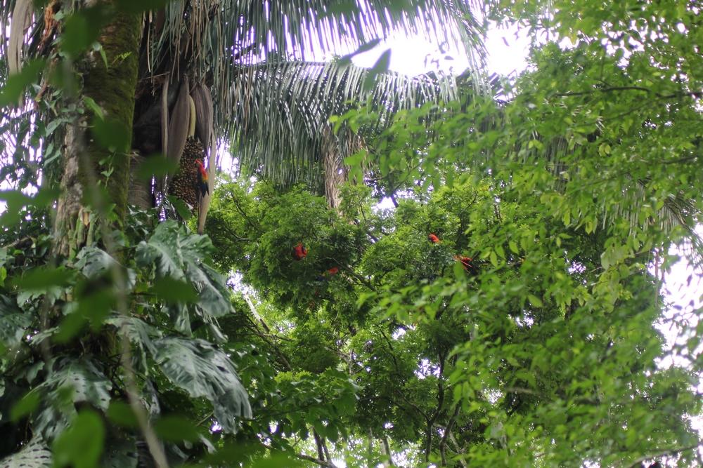 15 jours dans la jungle du Costa Rica 361172ara4r