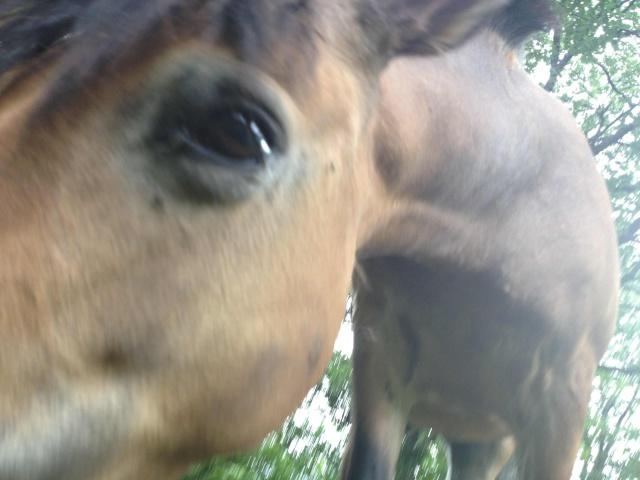 (Dep 63) HOLIDAY (dcd) et VIOLETTE, ponettes sauvées par Sonia R !!! (Fév et août 2012) 363008IMG1343