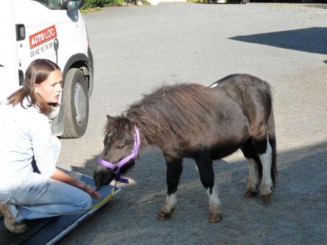 (Dept19) BIJOUX, Shetland, réservé par Lola1605 !!!! (Octobre 2012) 364078bijoux1