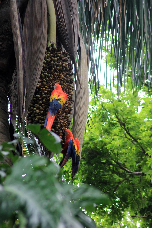 15 jours dans la jungle du Costa Rica 364797ara1r