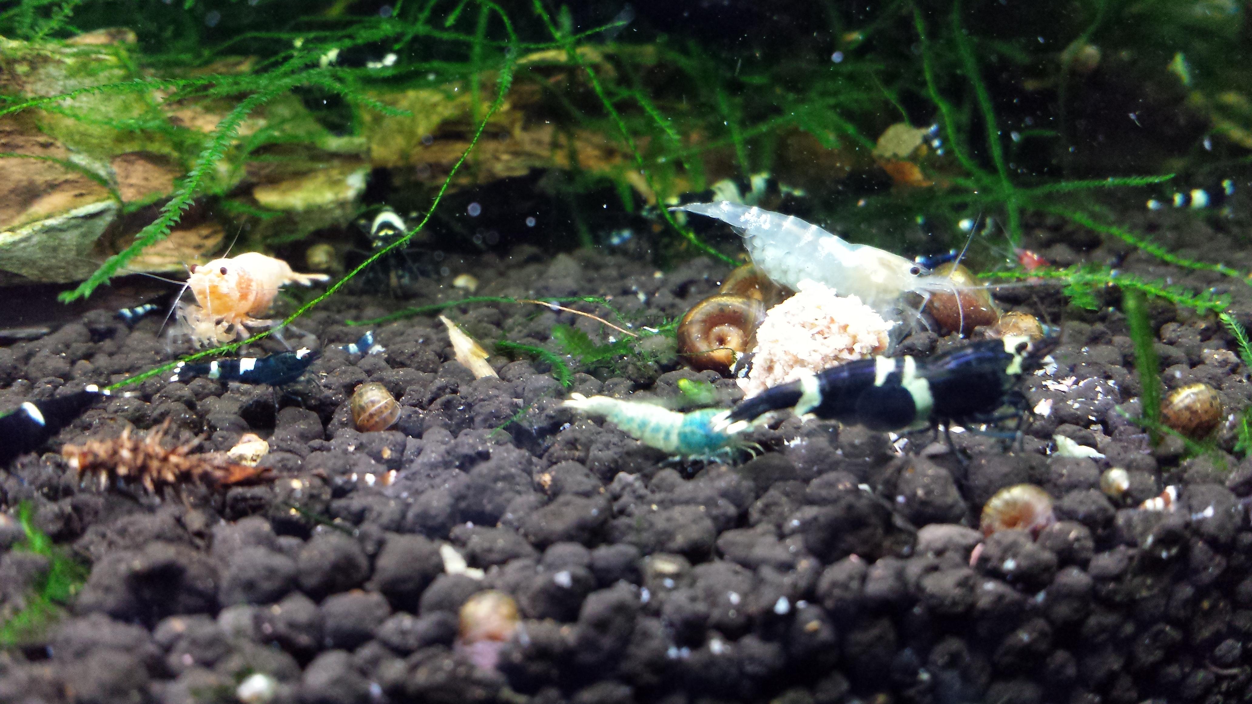 Mes bacs, une passion: l'aquariophilie!! 367207201306221554011