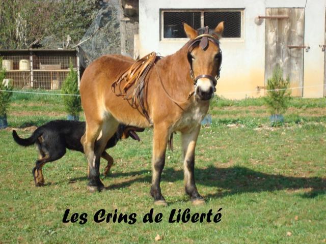 (Dep 63) HOLIDAY (dcd) et VIOLETTE, ponettes sauvées par Sonia R !!! (Fév et août 2012) 373666Ponette4