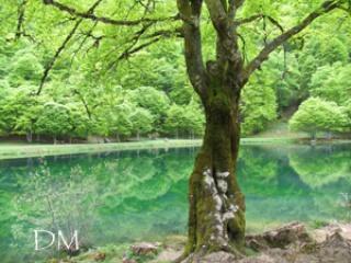 L'esprit des arbres 378010arbre4