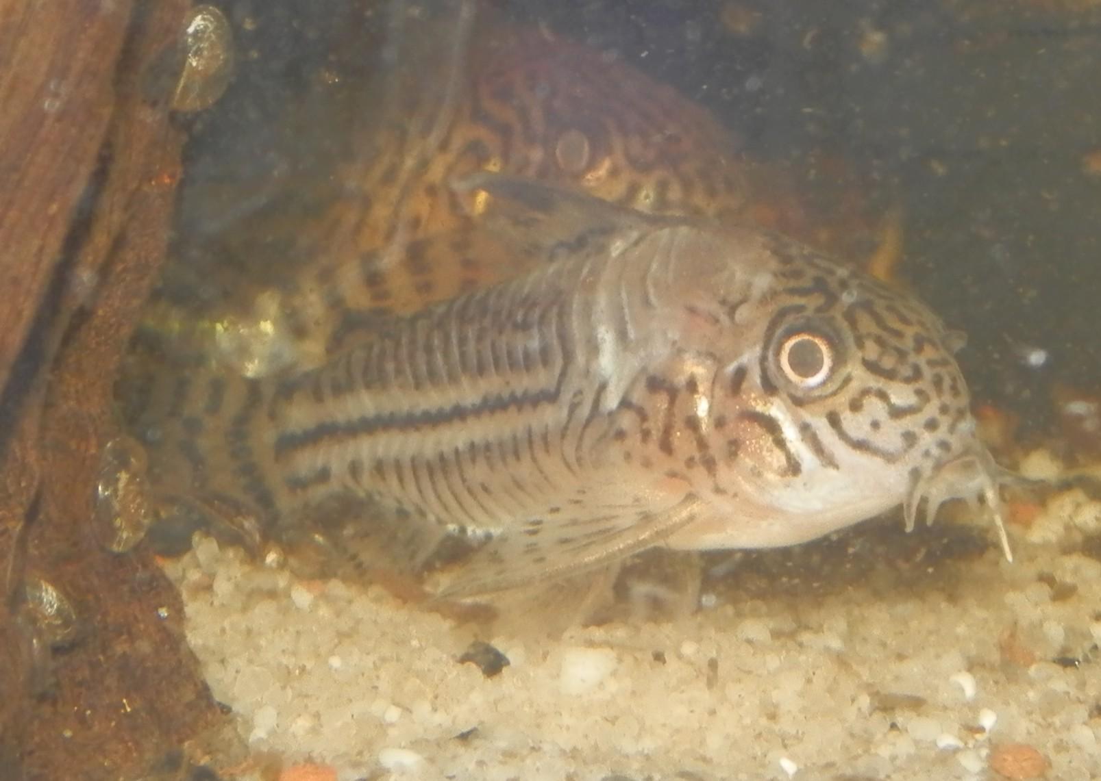 Reprise de l'aquariophilie - Démarrage d'un 180 litres 387205Sanstitre2