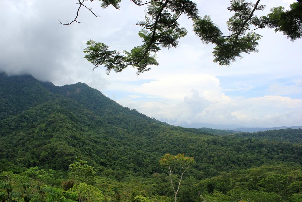 15 jours dans la jungle du Costa Rica 389094costa4