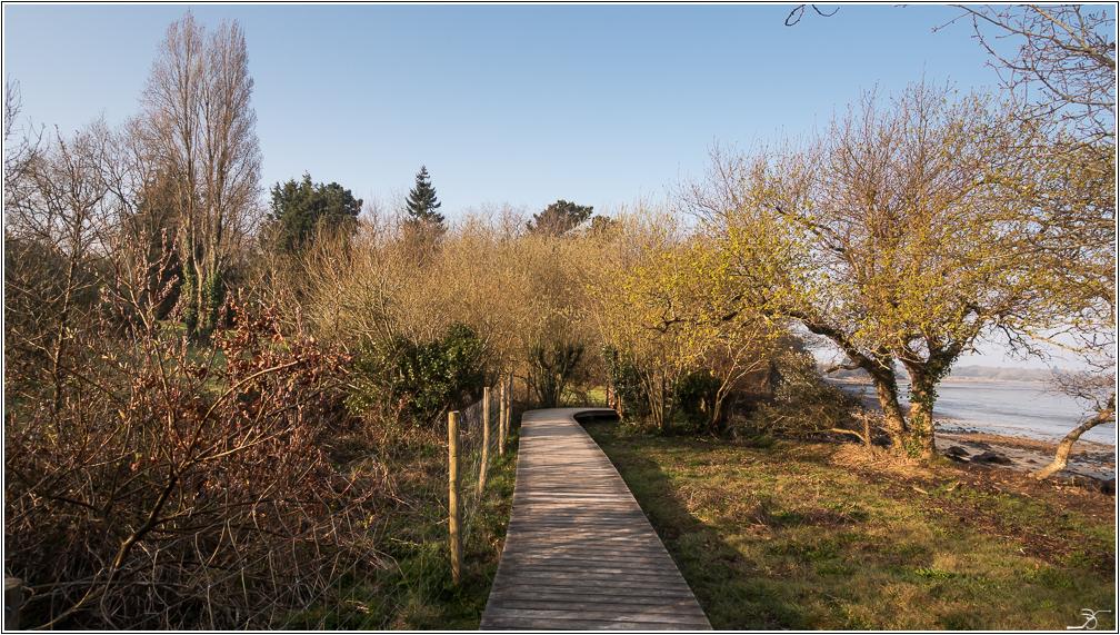 Morbihan, Le Duer, sentier cotier 390904LR6P3180012