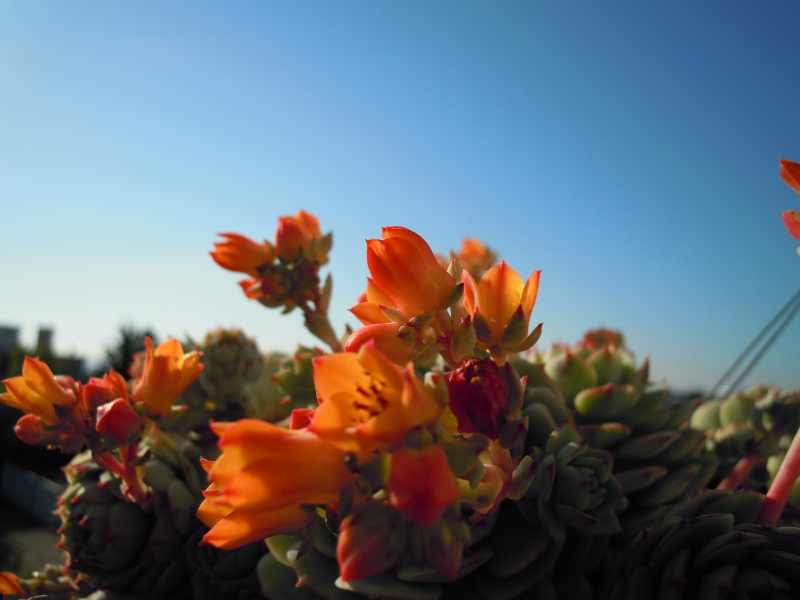 fraicheur et rayon de soleil sur les rebords de fenêtres... 395600DSCN4218