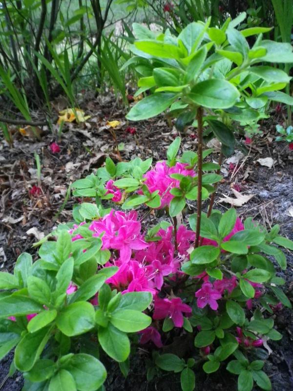 Quelques floraisons - Page 2 396400IMGP3085