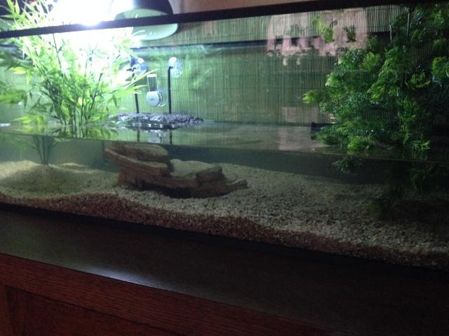 Aquarium pour sternotherus carinatus 398122IMG0986