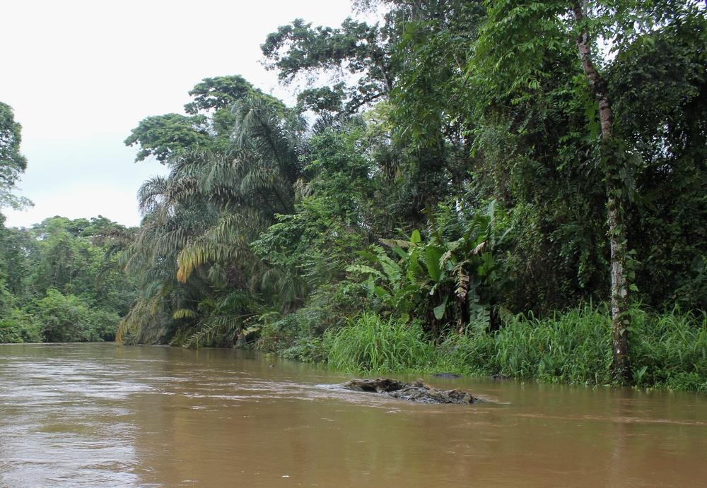 15 jours dans la jungle du Costa Rica 400765tortu2