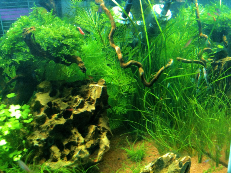 Mon Scaper's Tank 50L Aquascaping 402400IMG0342