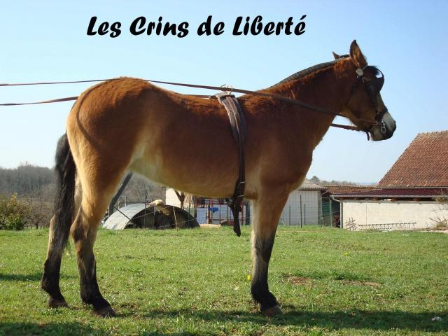 (Dep 63) HOLIDAY (dcd) et VIOLETTE, ponettes sauvées par Sonia R !!! (Fév et août 2012) 404088Ponette3
