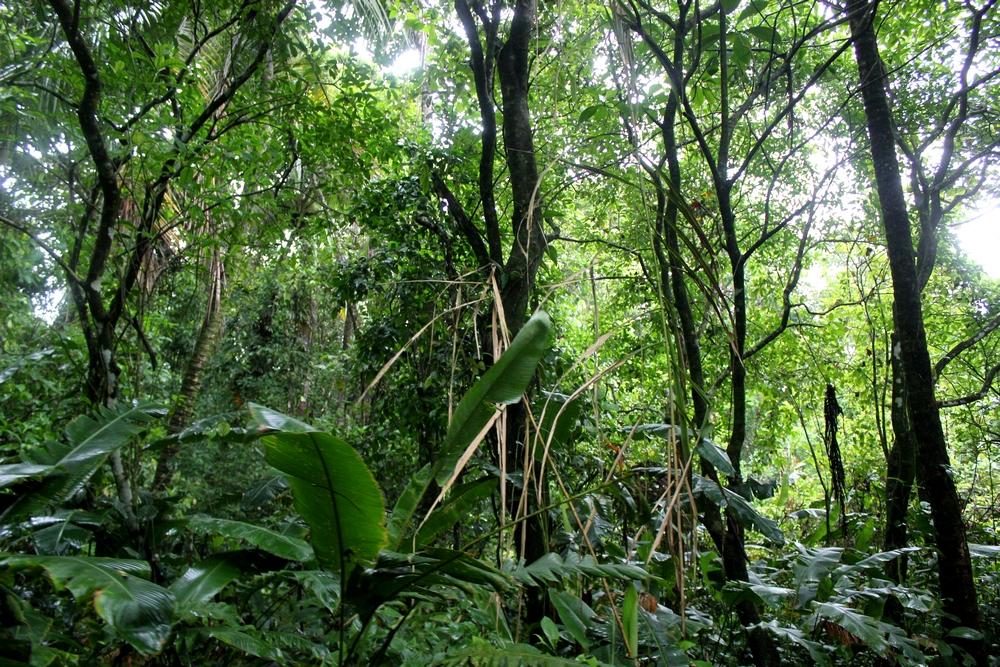 15 jours dans la jungle du Costa Rica 406733tortu3