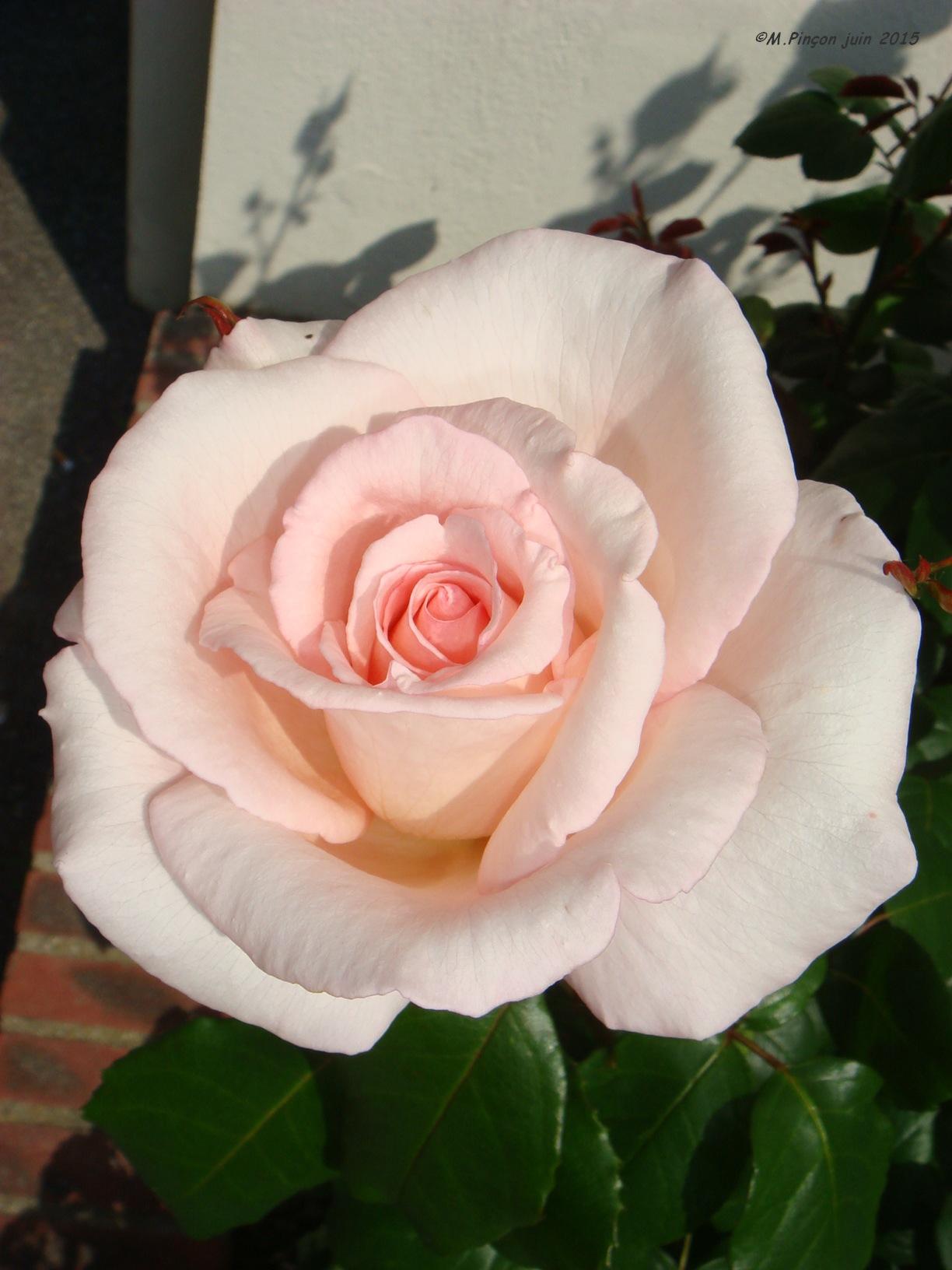 [Fil Ouvert] Fleurs 408936DSC08108