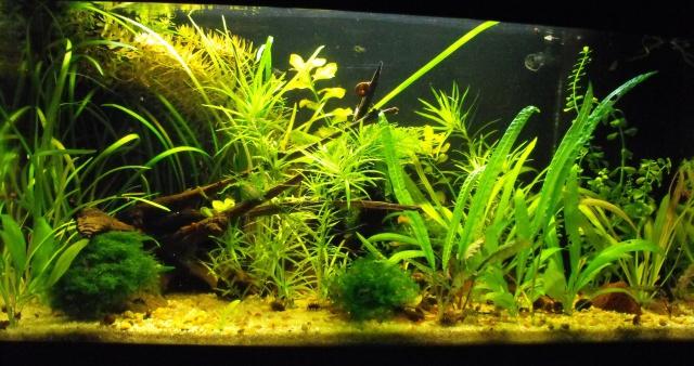 mes aquariums 40934660L
