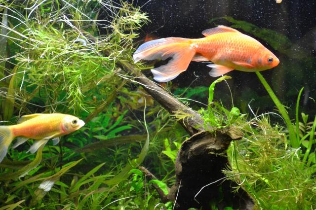 Je vous présente mon aquarium! =D 412006FresbyetFreestyle