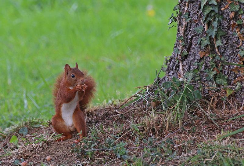 Mes petits copains écureuils. 4172186780