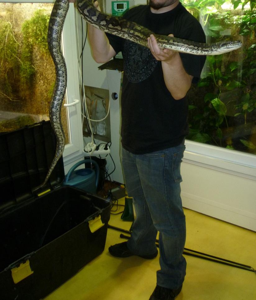 Premier serpent 419853mcdoadulte