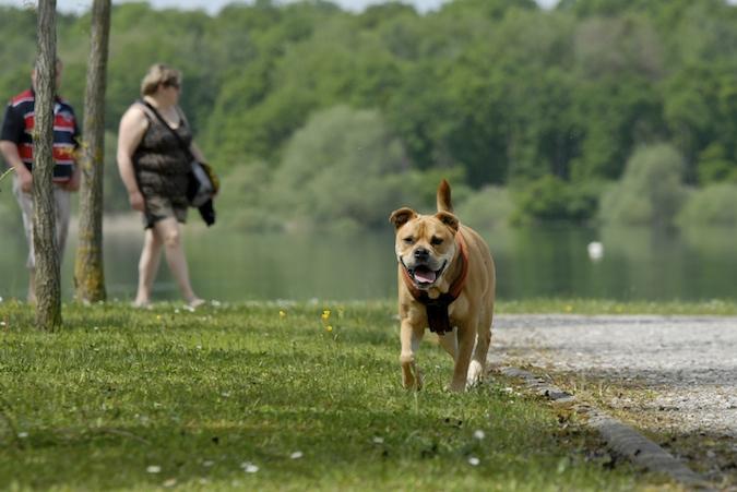 Balade au Lac du Der (51-52) - weekend du 23-24 mai 2015 - Page 3 423129DSC0052