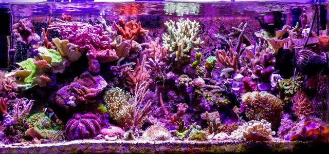 Mon premier aquarium eau de mer - Page 6 435860DSC0476