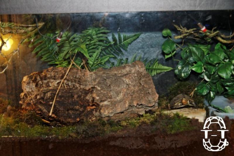 Regroupement des photos d'aquaterrariums espèces palustres 441200emy