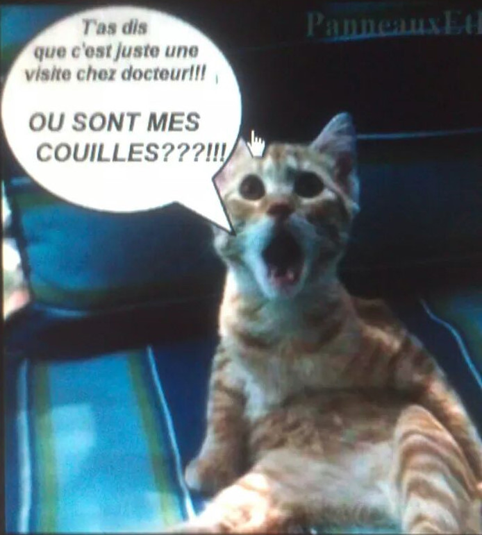 Humour en image du Forum Passion-Harley  ... - Page 5 447817271269IMG23373676492051
