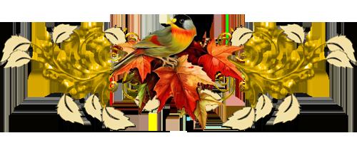 انواع طيور الحجل بالصور 44800075a7529f