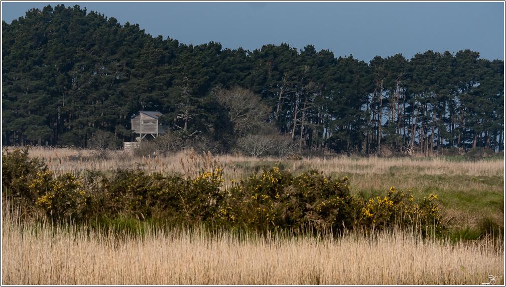 Morbihan, Le Duer, sentier cotier 449732LR6P1450318