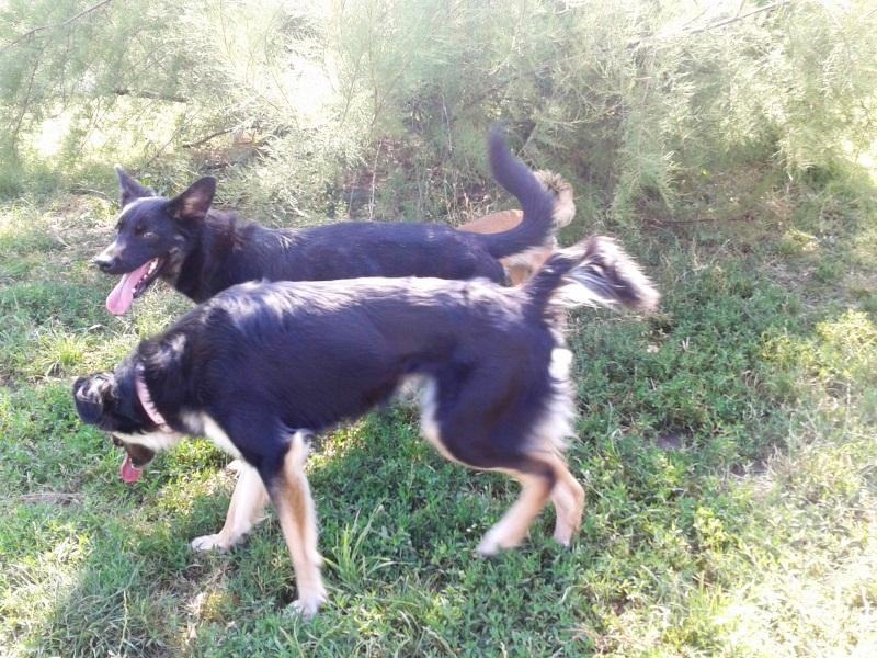 > Mika, un amour de petite chienne, née en mai 2011 - Adoptée 4507882012017