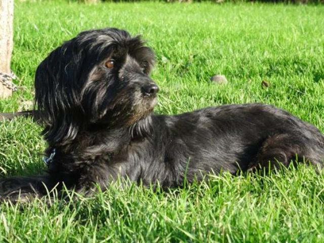 KENZO - cairn terrier/westie 10 ans (6 ans de refuge) SHPA à Le Havre (76) 455378103890068601161673550681062592425722242743n