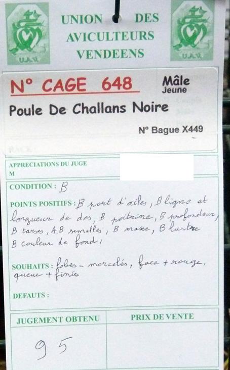 Poule de Challans - standard 455792P1120301