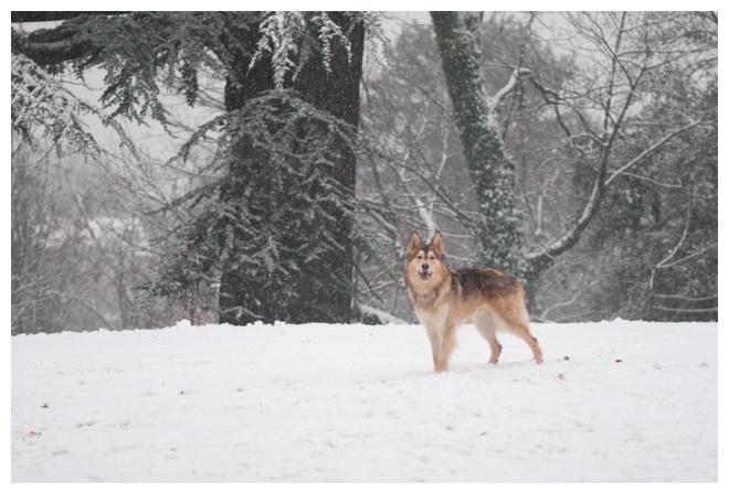 Nos loups grandissent, postez nous vos photos - Page 9 456673DSC5016640x480