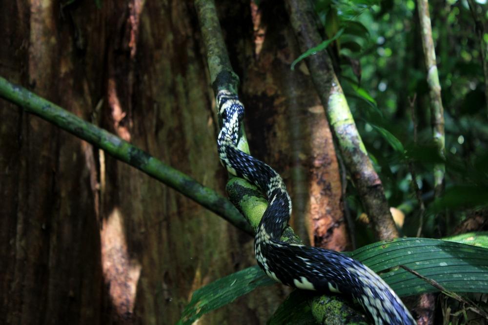 15 jours dans la jungle du Costa Rica - Page 2 457843spilo3r