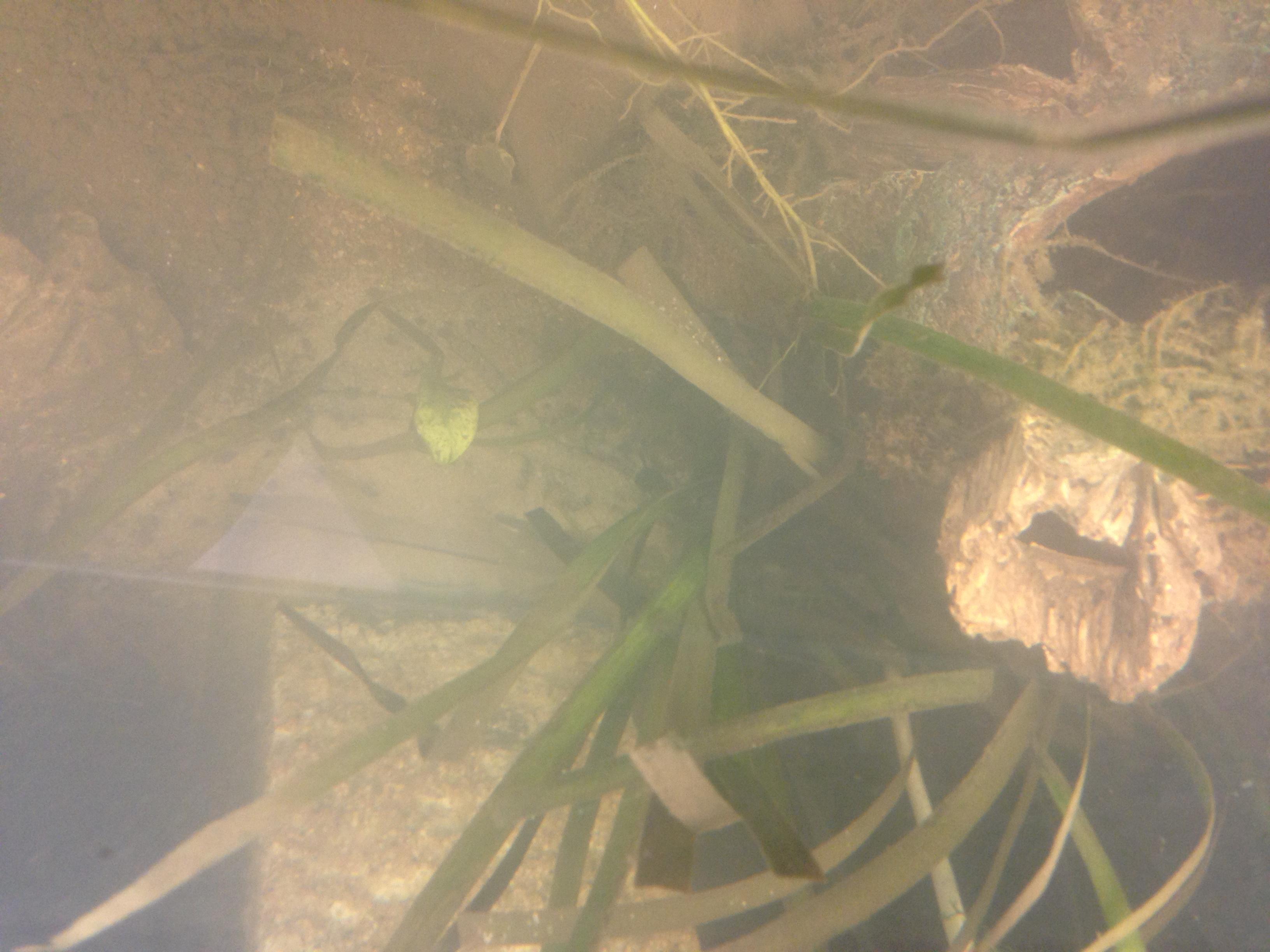 Mesures incohérentes et algues brunes 459551IMG02401