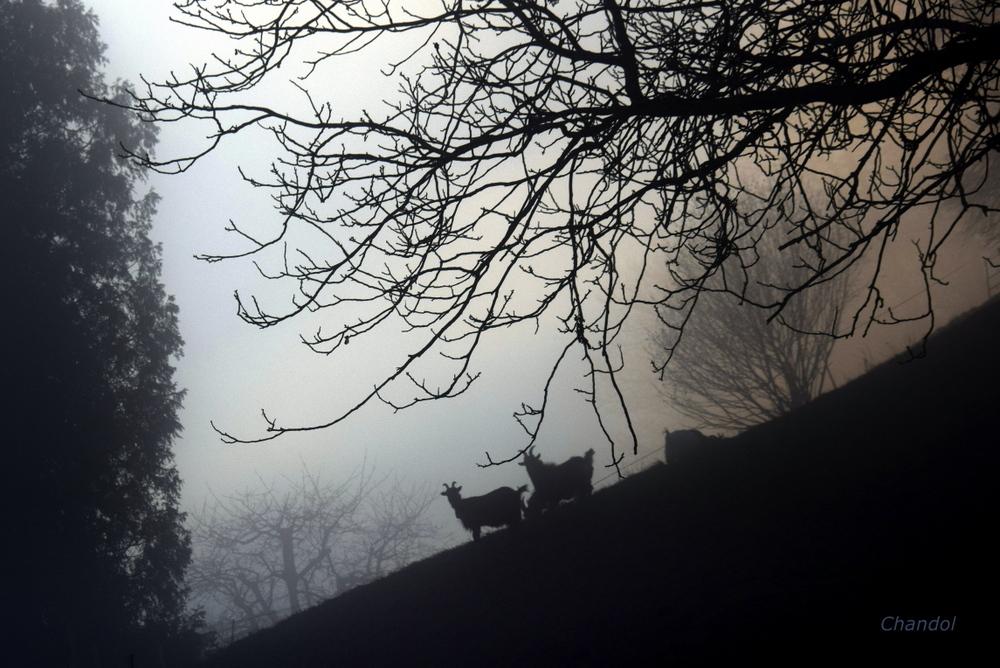 Brouillard 461884DSC0477001